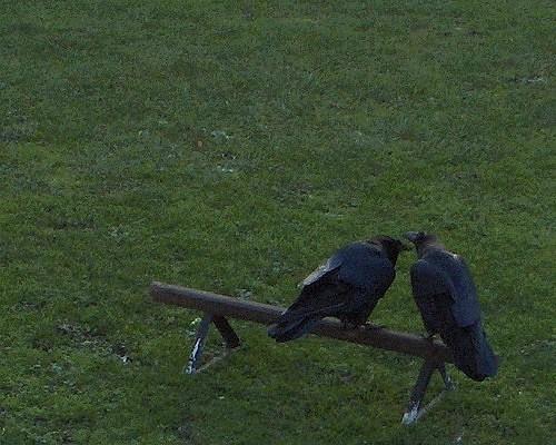 افسانه روی حضور این پرنده در محوطه قلعه تاکید دارد